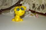 Zvětšit fotografii - Zvědavý citronový pejsek